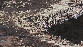 Groupe fongueux en bois photo libre de droits