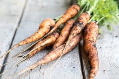 Groupe frais de carottes sur le bois Groupe de carottes fraîches avec l vert Photos stock