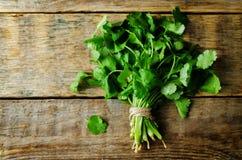 Groupe frais de cilantro photos stock
