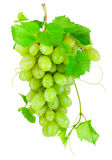 Groupe frais de raisins verts d'isolement sur le fond blanc Photo stock