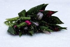 Groupe frais de tulipes lumineuses rouges sur la neige blanche Photo stock