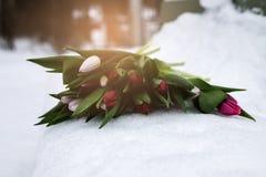 Groupe frais de tulipes lumineuses rouges sur la neige blanche Image libre de droits