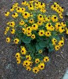 Groupe jaune de fleur Images libres de droits
