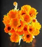 Groupe jaune de marguerites d'en haut Photographie stock
