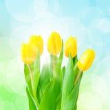 Groupe jaune de tulipes Image libre de droits