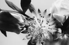 Groupe l'épousant noir et blanc Photographie stock libre de droits