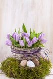 Groupe lilas de tulipes Image libre de droits