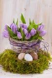 Groupe lilas de tulipes Image stock