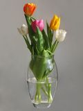 Groupe multicolore de tulipes Photographie stock libre de droits
