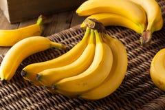 Groupe organique cru de bananes image stock