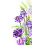 Groupe pourpre de fleurs sur le fond blanc Image stock