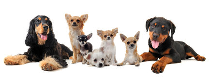 Groupe of puppies Stock Photo