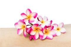 Groupe rose d'isolement de plumeria de fleur décoré sur le besid de tuile de roche Photos stock