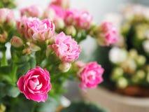 Groupe rose de fleurs Photo stock