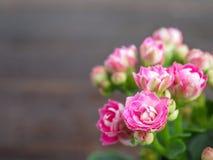 Groupe rose de fleurs Image stock