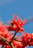Groupe rose de fleurs Images libres de droits
