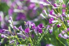 Groupe rose de fleurs Photo libre de droits