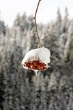 Groupe rouge dans la neige Photos stock