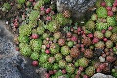 Groupe stoi wpólnie tłustoszowata roślina obraz stock