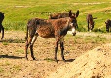 Groupe sur la prairie frôlant l'âne Photo stock