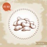 Groupe tiré par la main de haricots blancs de style de croquis Dirigez l'illustration de la nourriture d'alimentation saine d'iso illustration stock