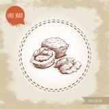 Groupe tiré par la main de noix de style de croquis Illustration de vecteur de nourriture d'Eco d'isolement sur le fond de vintag Image libre de droits