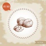 Groupe tiré par la main de noix de style de croquis Illustration de vecteur de nourriture d'Eco d'isolement sur le fond de vintag Photo stock