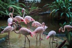 Groupe van flamingo's die zich in water in een wildernis bevinden royalty-vrije stock foto
