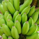 Groupe vert cru de bananes Photos stock