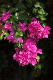 Groupement de fleur Photographie stock libre de droits