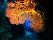 Grouper υδρορροή στοκ εικόνα