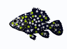Grouper. A big grouper in the water Royalty Free Stock Images