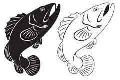 grouper Στοκ Εικόνα