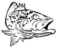 grouper Stockfoto