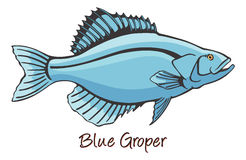 Grouper, Color Illustration Stock Photo