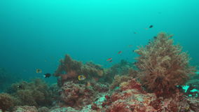 Grouper on a coral reef. 4k. Colorful coral reef with healthy corals and Grouper. 4k footage stock footage