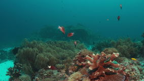 Grouper on a coral reef. 4k. Colorful coral reef with healthy corals and Grouper. 4k footage stock video