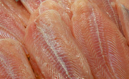 Grouper fillets on a market stall Stock Images