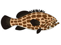 Grouper fish cartoon Stock Image
