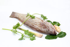 Grouper Fish cleaned scaled Stock Photography
