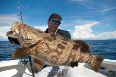 Grouper fish. Happy fisherman holding a grouper stock images