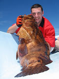 Grouper fish Royalty Free Stock Photos