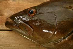 Grouper fish seafood, fishing catch over wood Royalty Free Stock Images