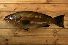 Grouper fish seafood, fishing catch over wood Royalty Free Stock Image