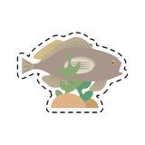 grouper fish side view sea life coral Stock Photography