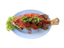 Grouper fish of Thai seafood,The Seasoned fish with red hot chil Stock Photography