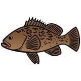 Grouper Fish Royalty Free Stock Photos