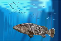 Bass, grouper in the sea. Grouper floating in the water surrounded by small fish format CDR vector illustration
