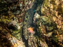 Grouper. stock photo