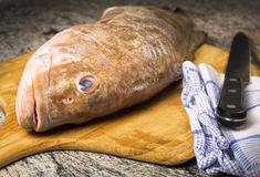 Grouper in kitchen Stock Photos